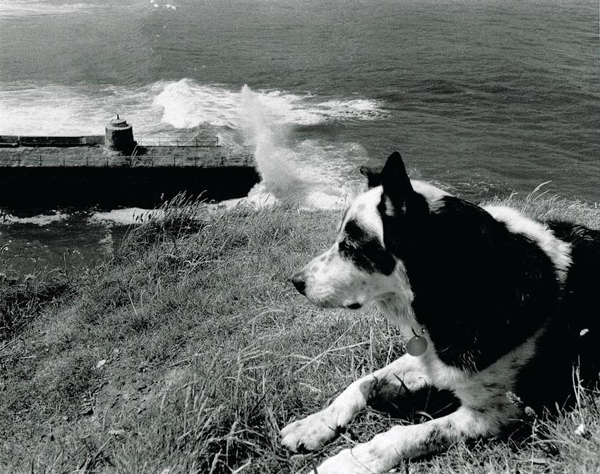 Cornish Mine Images. Ben the Dog
